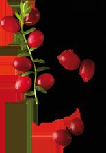 rh-210-cranberry-mutter-2